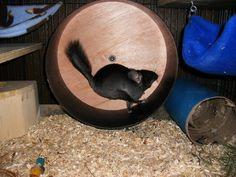 "The ""ChinSpin"" is, by far, the BEST chinchilla exercise wheel. They are made by Quality Cage Company."