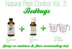 Natural pest control. Bedbugs.