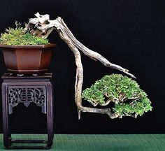 I really love the look of Bonsai trees. Please check out my website thanks. www.photopix.co.nz