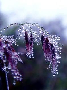 Crystalline droplets formed in the cool morning -  These colors would look lovely in a log cabin or crazy quilt