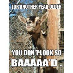 1000 Free Birthday Meme To Rock That Friend S Special Day Funny Birthday Meme Birthday Wishes Funny Happy Birthday Funny