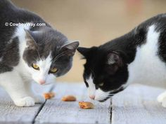 Lemur and Eenie investigating the treats