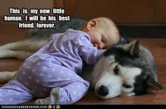 Babies and their pets