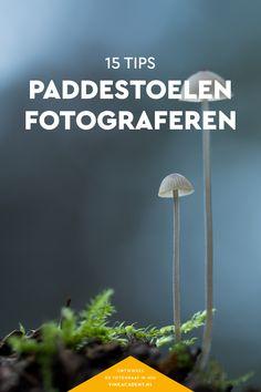 Fotografietips voor het maken van mooie paddestoelfoto's! Ook als je géén macro-objectief hebt!  Natuurfotografie, Macrofotografie, Herfstfotografie, Fotografietips, Fototips