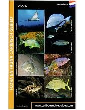 visherkenningskaart Caribische Zee, Bonaire, Aruba, Curaçao, fish id