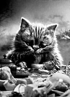 "Cheshire Cat from Tim Burton's ""Alice in Wonderland"" (2010)"
