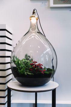 Mini Terrarium, Garden Terrarium, Cactus Terrarium, Ideas Florero, Plants In Bottles, Mini Bonsai, Plants Are Friends, Plant Lighting, Bottle Garden