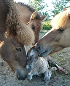 All hands on deck to clean up the baby.. #SaddlesForSale #Horses #MySaddleTrader