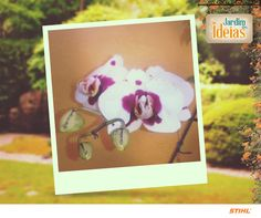Foto da Orquídea enviada pelo Luiz Antonio Trarbach!