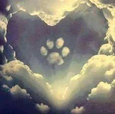 R.I.P. Sneezy. U were an awesome cat, & a wonderful friend. I miss u everyday. A.