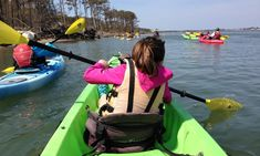 Things to do in Ocean City MD - Assateague Island