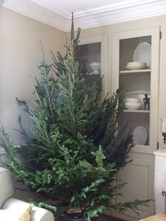 the undressed tree! - I think a few scattered through the house would be nice