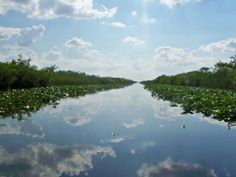 Everglades by AimeesPhotoShop on Etsy, $15.00