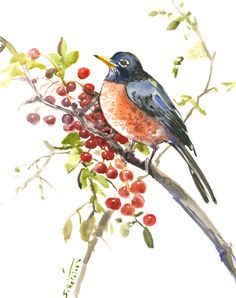 American Robin Original watercolor painting 14 x 11 in, robin bird art, birding, bird lover robin and berries, birds and flowers asian style by ORIGINALONLY on Etsy