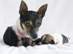 Bourbon and her puppies http://www.battersea.org.uk/about_us/paul_o_gradys_for_the_love_of_dogs/meet_the_dogs/bourbon.html