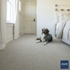 Chase Pet Friendly Carpet with Stainmaster® PetProtect® shown in the Briarwood color | Starting at $4.89/square foot | #carpet #petfriendlycarpet #stainmaster #carpeting