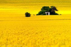 Жълто - Евгени Динев