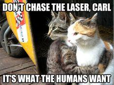 cat memes laser