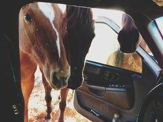 Poster   CAR HORSES von Kevin Russ