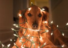 Goldens light up our lives in more than one way! lol
