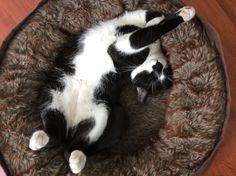 My sleepy Oreo http://ift.tt/2teIujc