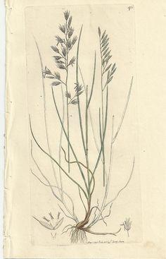 Antique James Sowerby Botanical Print Plate by WondersOfThePast, $9.25