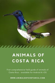 This app is the first comprehensive field guide of animals of Costa Rica containing almost 7000 pict Amphibians, Reptiles, Mammals, Marine Fish, Field Guide, Image Shows, Costa Rica, Fresh Water, Spiders