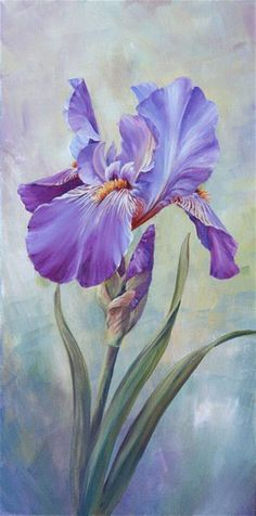 Marianne Broome —Single Iris (356x720) | Floral — Iris | Pinterest