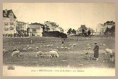 """Bruxelles - Les moutons duParc de Saint-Gilles  Le parc de Forest. Au début du XXè, beaucoup l'appelaient par erreur """"Parc de Saint-Gilles"""", alors que plus de 95% de la superficie du parc se trouve sur Forest."""