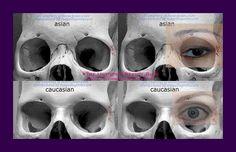 asian-caucasian-eye-diff1.jpg 900×580 pixels