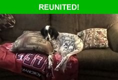 Great news! Happy to report that Champ has been reunited and is now home safe and sound! :)