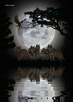 Moon Wolves really cool picture.