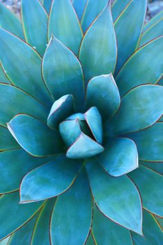Source of inspiration #3 - Plants.  Succulent plants are naturally geometrical and harmonious. © JULIEN HUBERT -M-