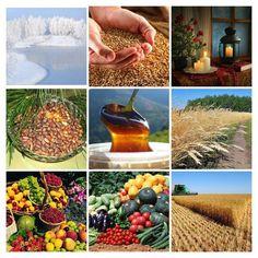 Поэтический блог Екатерины Комаровой: Урожай