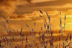 Last light at Sunset   por Infomastern