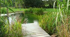 natural pool - deck and reeds Swimming Ponds, Natural Swimming Pools, Natural Pools, Landscape Design, Garden Design, Retention Pond, Pond Life, Pool Waterfall, Splash Pad