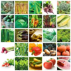 How to Grow Vegetables and Recipes from Taste of Home