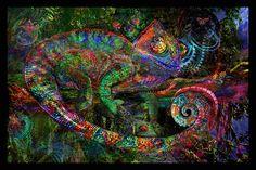 Chameleon Poster - Jumbie Art