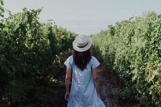 woman in blue short-sleeved dress and white hat standing between green leafed plants during daytime a story walking of Alice from tale Spirit Of Discernment, My Daily Devotion, Spiritual Attack, Drift Away, Prayer For Today, Hat Stands, Making Excuses, You Are Enough, Daily Devotional