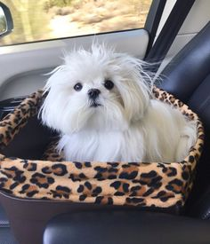 Maltese and Children: Is It a Good Combination - Champion Dogs Maltese Dogs, Dogs And Puppies, Teacup Maltese, Doggies, I Love Dogs, Cute Dogs, Awesome Dogs, Dog Rules, Dog Coats