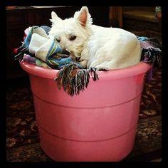 Such a cute dog!