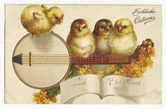 2845), Prägekarte, Küken mit Musikinstrument, 1900 | eBay