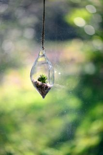 A water drop shaped hanging container with a succulent
