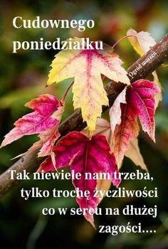 Motto, Plants, Autumn, Friends, Disney, Rose Basket, Polish Sayings, Pictures, Amigos