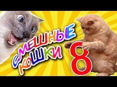 Смешные кошки 8 ● Приколы с животными лето 2014 - коты ● Funny cats vine compilation ● Part 8