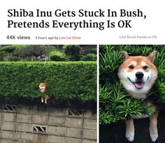 dog is chillin_ stuck in bush