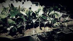 #Riedel #copas #buenamesa #vino #tableart #lorettavalle #pasiónporlosdetalles #hacemosdeloordinarioalgoextraordinario #cursos