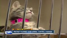 Union workers stage protest as County mulls plan to outsource Animal Control services http://social.brandpixel.io/224cb210 #OutsourcingPhilippines #LPO via @10NewsAarons