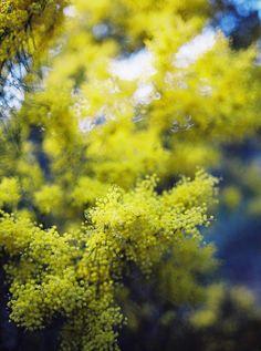 #Nature #Photography || #OlgaBennett || A•