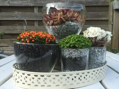 Succulenter i assorterede glas med pyntesten.